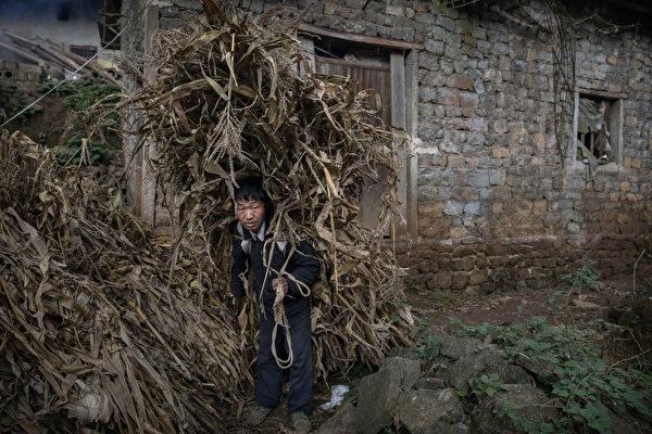 貴州貧困山區的農民。(Kevin Frayer/Getty Images)