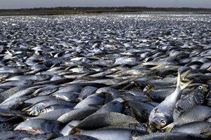 數千條活魚出現在墨西哥海灘 民眾狂撿