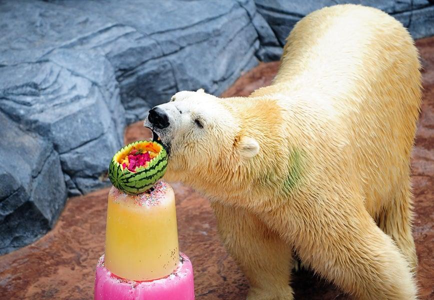 數十隻北極熊「造訪」俄核基地 引發混亂