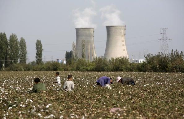為了制裁中共在新疆地區侵犯人權和強迫勞力,上月美國特朗普政府禁止從中國新疆進口棉花等產品。圖為中國新疆地區的棉花地。(China Photos/Getty Images)