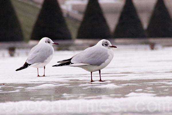 寒雪中的鳥(易恆/大紀元)