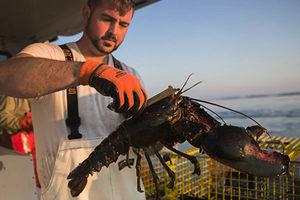 保護龍蝦產業 特朗普或對中國商品加新稅
