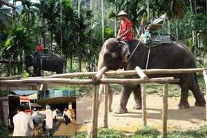 強逼吃生香蕉 泰國女遭大象捲起重摔昏迷