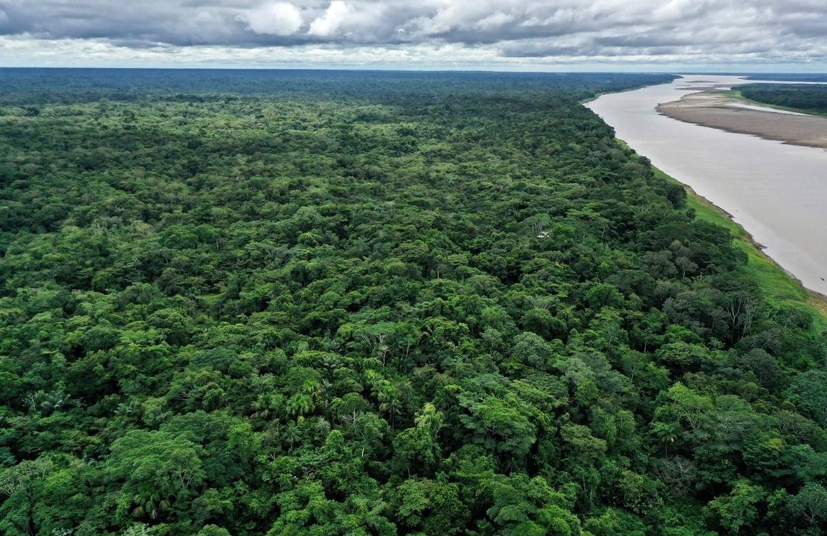 巴西36歲飛行員賽納遭遇了飛機失事,僥倖逃脫的他在鱷魚和蛇出沒的亞馬遜叢林中靠吃鳥蛋和野果生存了36天。圖為2020年11月20日拍攝的亞馬遜河叢林鳥瞰圖。(RAUL ARBOLEDA/AFP via Getty Images)