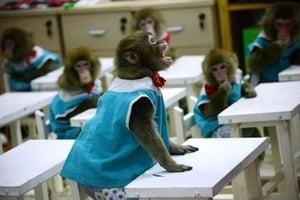 美教授:植入人類基因猴研究不該發生