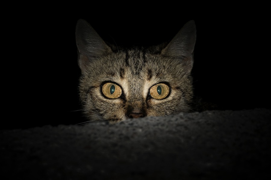 日本小貓的機警救了老翁一命 獲警方表揚