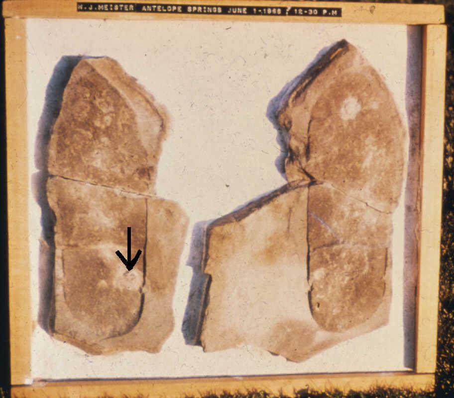 三葉蟲腳印化石。(明慧網)