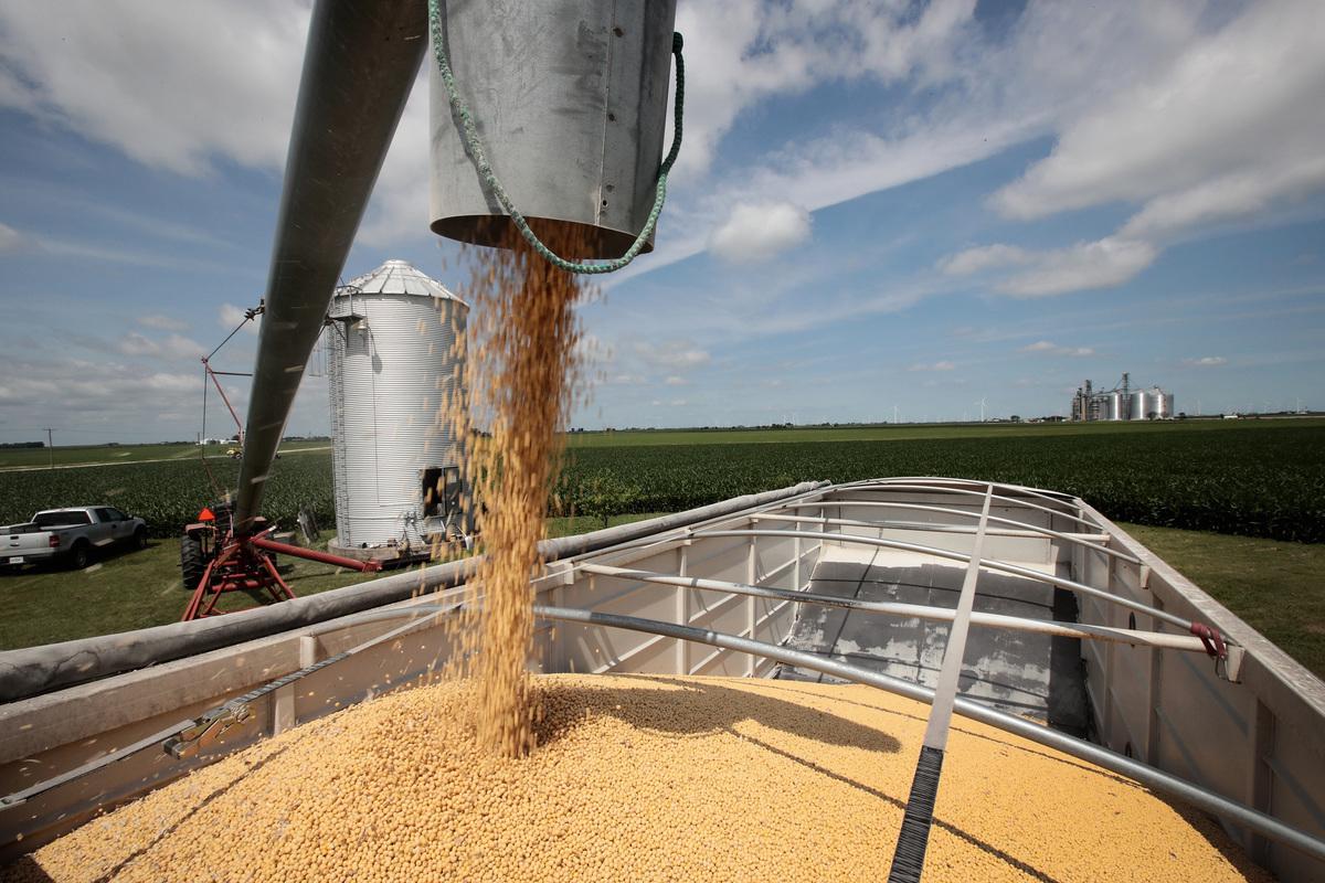 中共財政部12月6日公佈,將對部份美國進口大豆和豬肉進行關稅豁免。(Scott Olson/Getty Images)