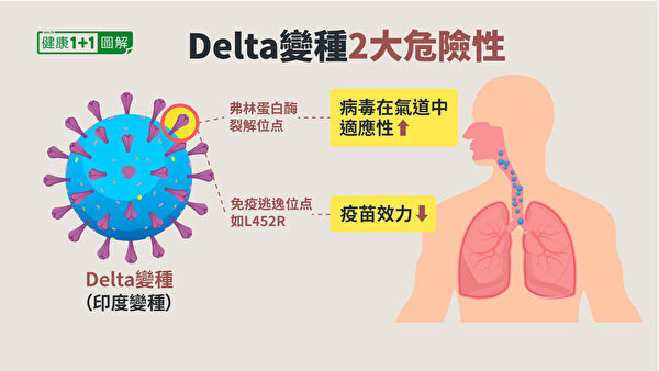 Delta變種在刺突蛋白的重要突變,增加病毒在呼吸道的適應性。(健康1+1/大紀元)