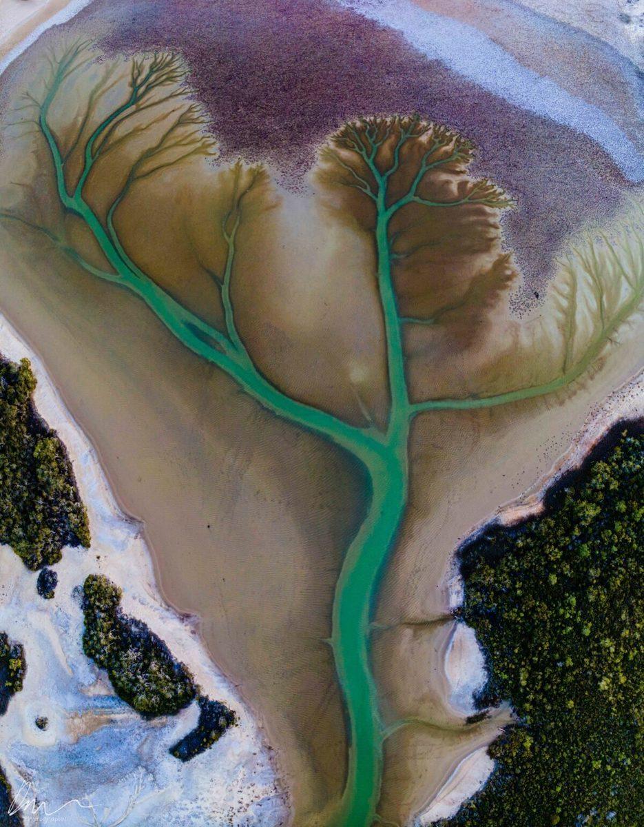 澳洲攝影師Derry Moroney在卡科拉湖用無人機航拍時,偶然發現了這些巨大的樹狀圖案。(Derry Moroney Photography提供)