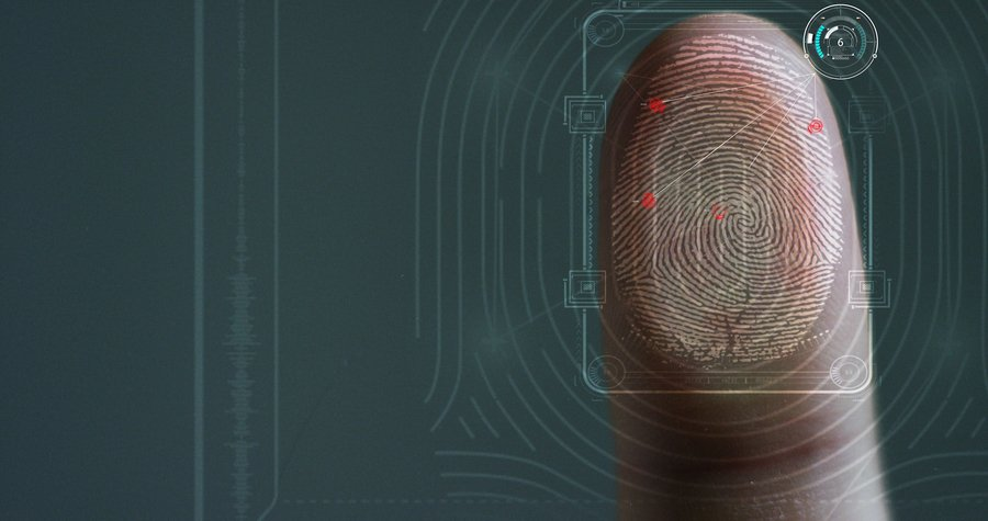 新研究發現指紋對觸覺起到關鍵作用