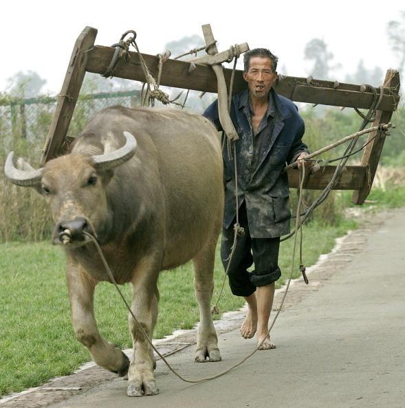 在疫情期間,中共繼續強推「合村併居」,村民拒絕後被騷擾,被強行帶走「約談」。(Stringer: LIU JIN/AFP)