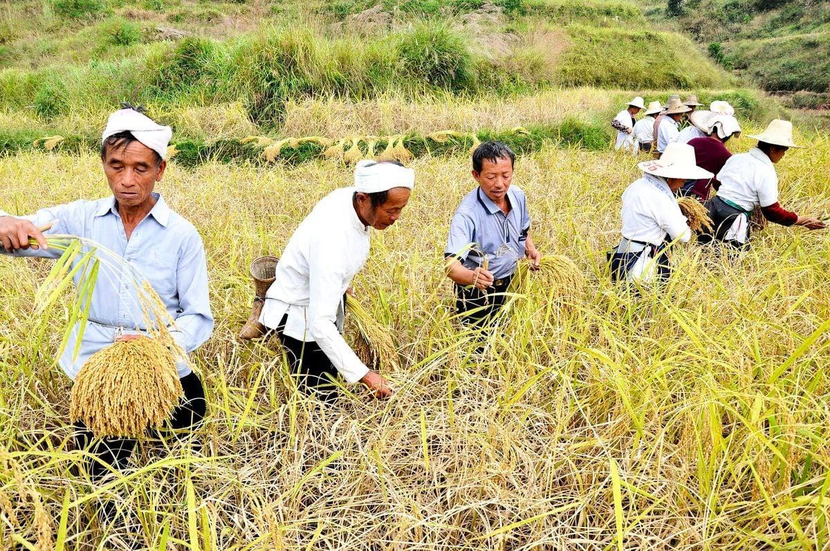 圖為農民在田中勞作。(AFP via Getty Images)