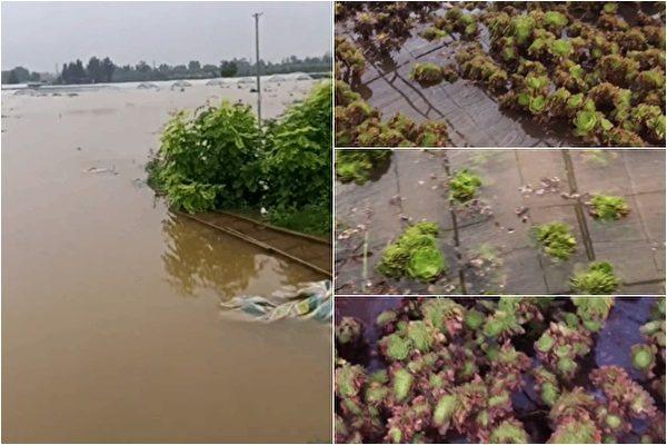 位於鄭州市北15公里的豐樂農莊的一位種植戶告訴《大紀元》:「前天晚上水庫開始洩洪,我們都是跑出來的,啥也沒帶。」(影片截圖)