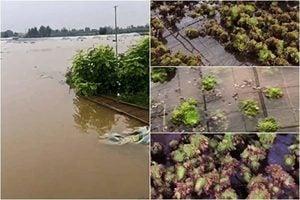 鄭州村民:水庫半夜洩洪 我們都是跑出來的
