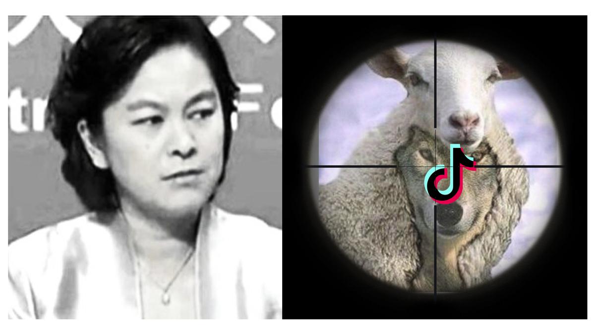 抖音「羊皮落地」遭圍剿,華春瑩仍在混淆視聽。(大紀元製作)