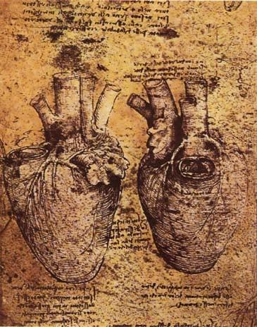 達文西所畫的人類心臟手稿。(公有領域)