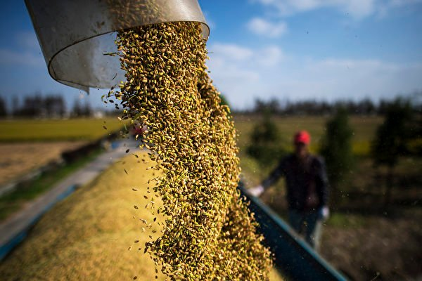 中國最近兩年突然大舉進口糧食,給國際社會帶來巨大的不確定性和隱憂。  (JOHANNES EISELE/AFP via Getty Images)