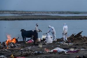 印度恆河染疫屍體被衝上岸 疑火葬場不堪重負