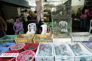 墨西哥緝獲走私中國的1.5萬隻瀕危淡水龜