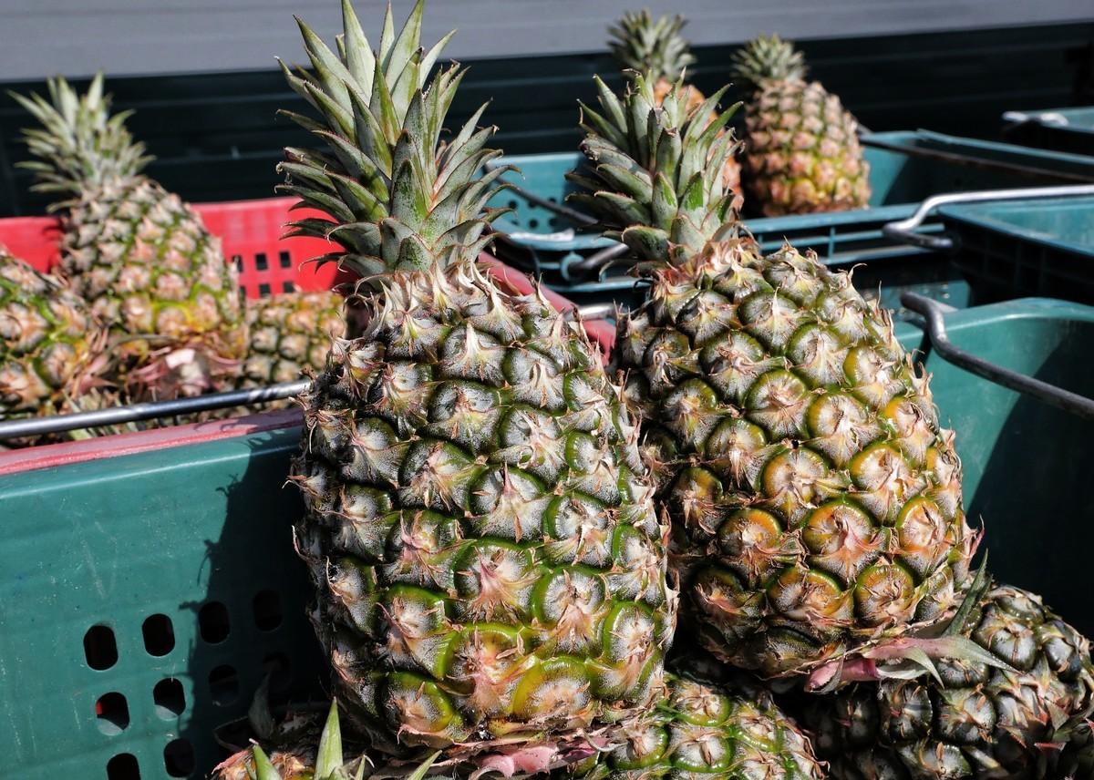 菠蘿資料照。(中華民國總統府提供)