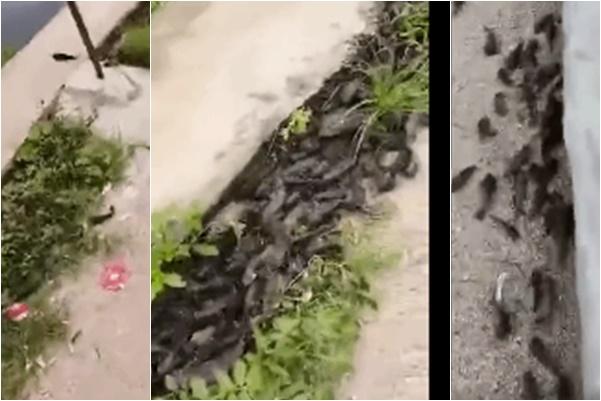 廣東頻現異象 暴雨地震千魚躍岸