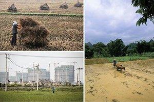 疫情蟲災人禍 中國糧儲面臨四大挑戰