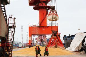 貿易戰中方再讓步 訂購第二批美國大豆