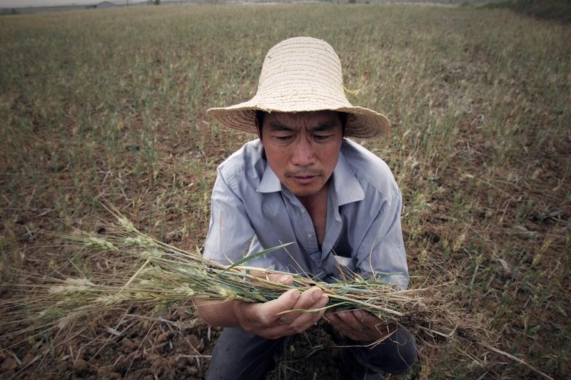 貿易戰下中國糧食危機 學者:恐爆政治動盪