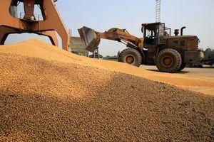 貿易戰或威脅大陸糧食供應