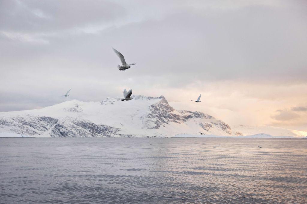 中共在北極地區不斷擴大其影響力引發美國關注。(CHRISTIAN KLINDT SOLBECK/AFP via Getty Images)
