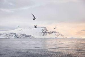 美國務院官員:正認真對待中共的北極野心