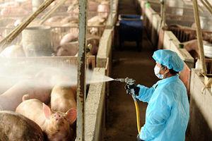中國驚現新豬流感病毒 憂人傳人恐引新一波疫情