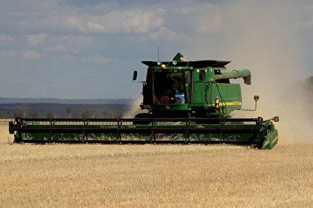 2007年11月12日,澳洲新南威爾士州格倫費爾(Grenfell, New South Wales)大麥收穫。(Greg Wood/AFP via Getty Images)