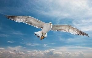 幾百萬人搶看的驚奇短片:海鷗騎海鷗