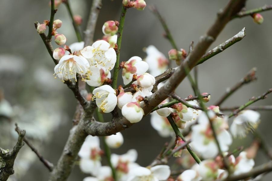 二十四節氣之末 大寒將至春天不遠