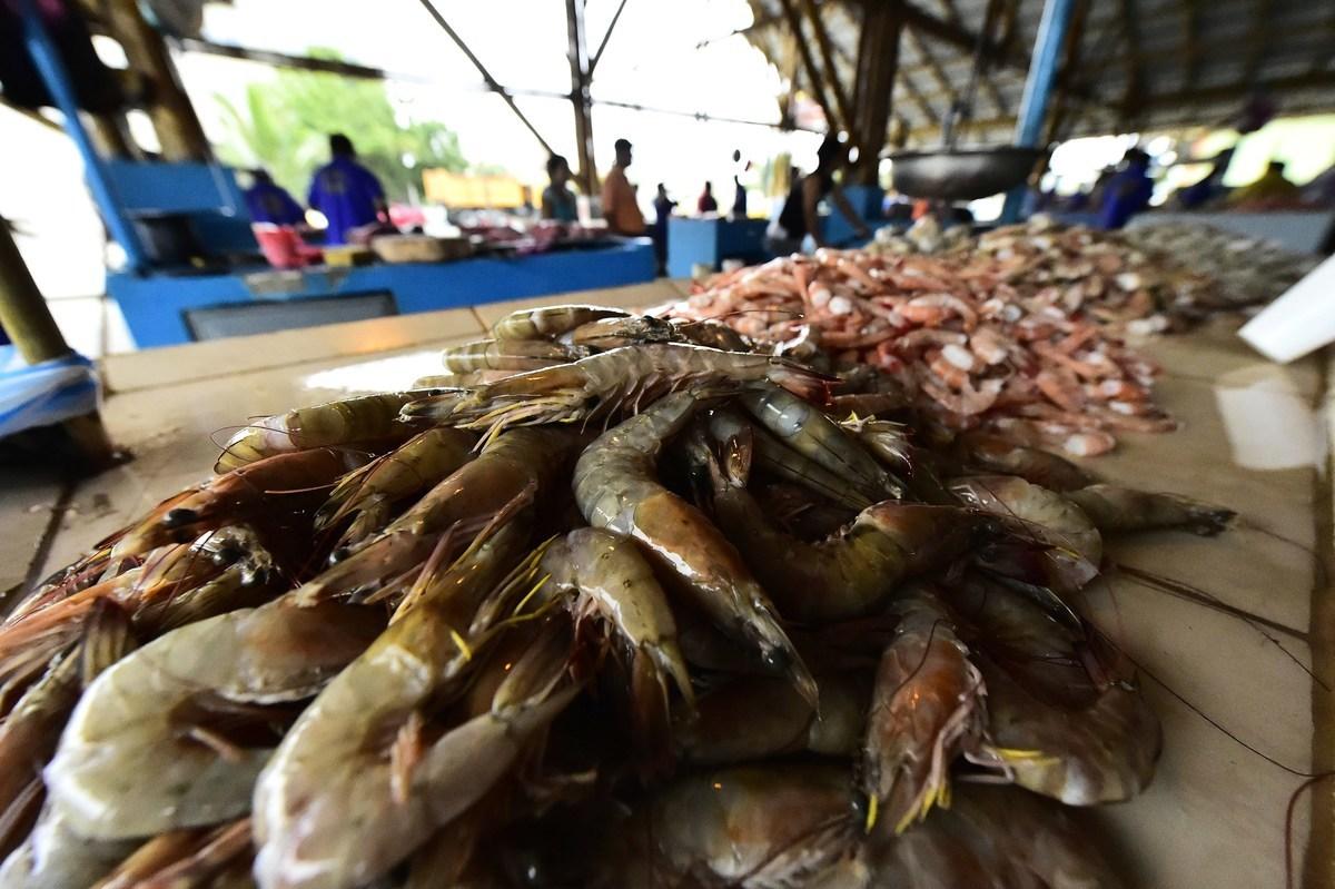 近日中共當局下令全國禁售厄瓜多爾進口白蝦。圖為2014年8月29日在厄瓜多爾菜市場上出售的蝦。(AFP/Getty Images)