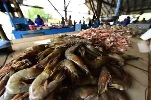 中共下令全國禁售厄瓜多爾白蝦
