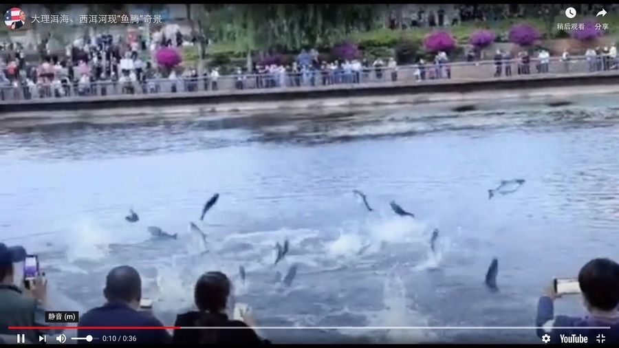 中國異象頻發 多地現「魚騰」現象