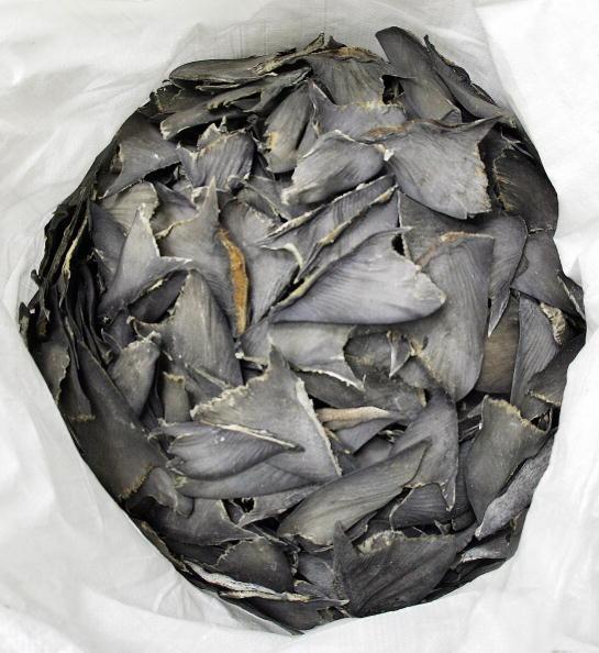 非法從香港進口魚翅 卑詩省貿易公司被罰