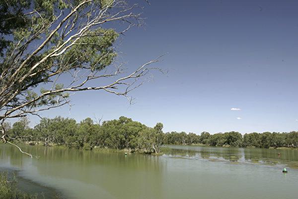 澳廣報道,中紡公司的全資澳洲子公司優尼拜爾(Unibale Pty Ltd)擁有新州Murray-Darling盆地北部7,000兆升水權。圖為Murray-Darling河。(Robert Cianflone/Getty Images)