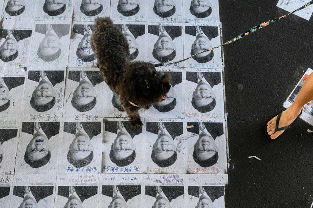 何君堯照片被鋪地上任人踩,成為當地一景。(PHILIP FONG/AFP/Getty Images)