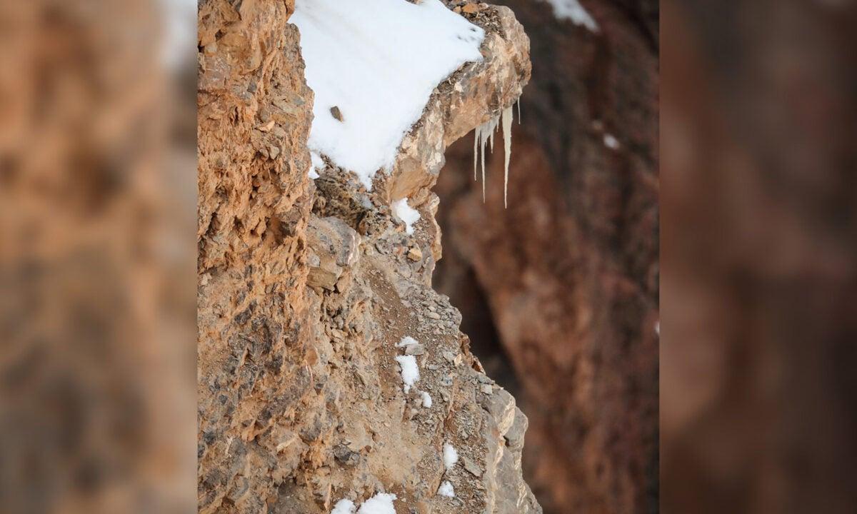 印度野生動物攝影師德賽曾在印度北部喜馬拉雅山的一處懸崖峭壁拍攝到一隻藏身於岩石間的珍稀雪豹,它的毛色與周圍的環境幾乎融為一體,不細看還真難以辨別。您看到雪豹了嗎?(德賽提供)
