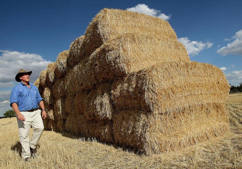 隨著農民從嚴重的乾旱和其它自然災害中恢復過來,澳洲獲得了連續第二個豐收年。(GREG WOOD/AFP/Getty Images)