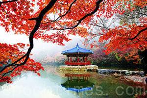 內藏山最美紅葉 南韓追「楓」首選