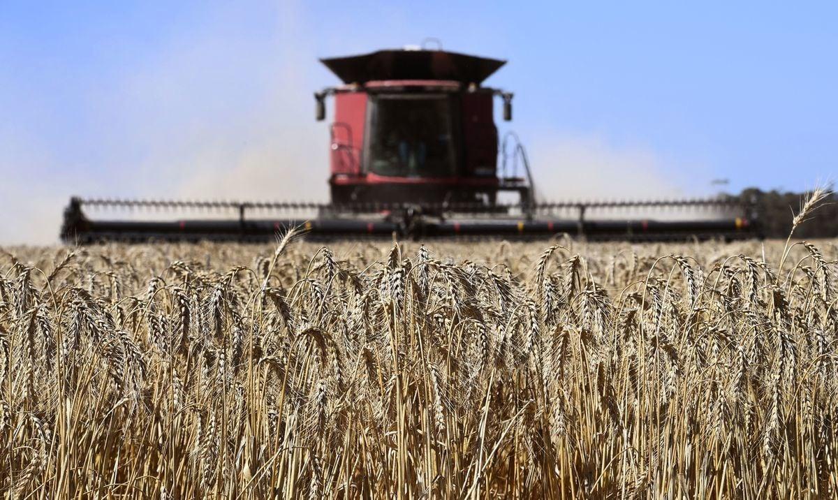 圖為2021年1月12日,在墨爾本以西約100公里的一個維州農場正在收割麥田。(WILLIAM WEST/AFP via Getty Images)
