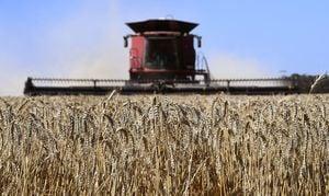 澳冬季作物大豐收 產量有望達到史上第二高