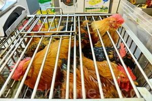 大陸出現今年首宗人類感染H7N9禽流感個案