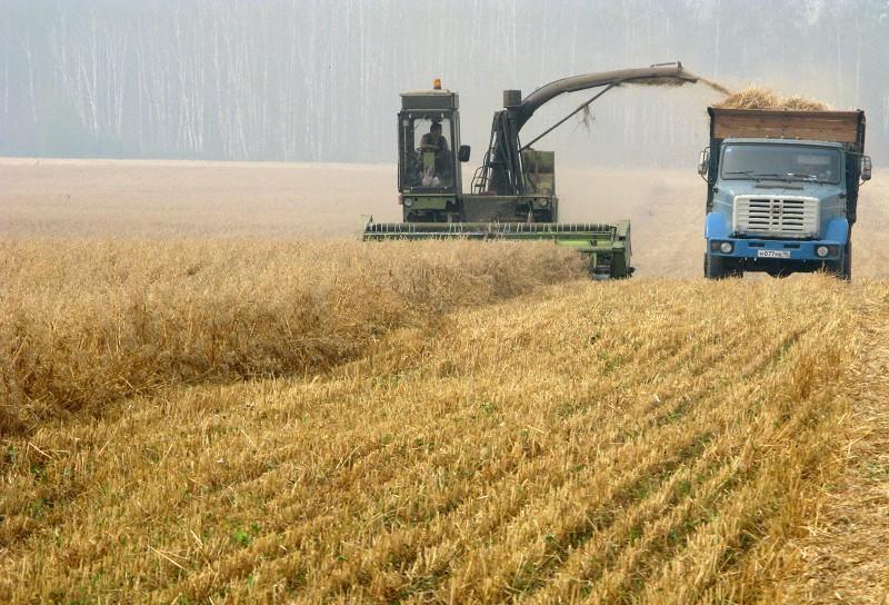 有消息顯示,大陸增加進口百萬噸美國粟米。圖為農場正在收割糧食。(AFP/Getty Images)