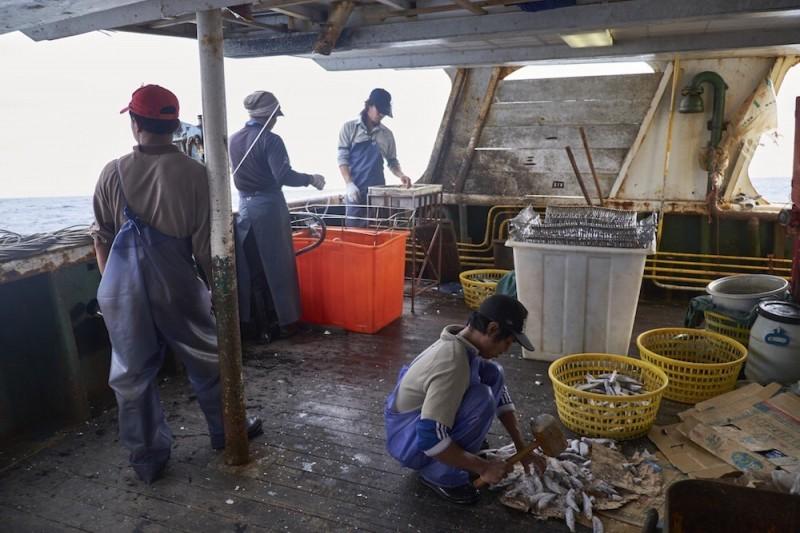 美首將台漁獲列「強迫勞動製品清單」 出口恐受嚴格限制